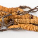 Czym charakteryzują się grzyby cordyceps?